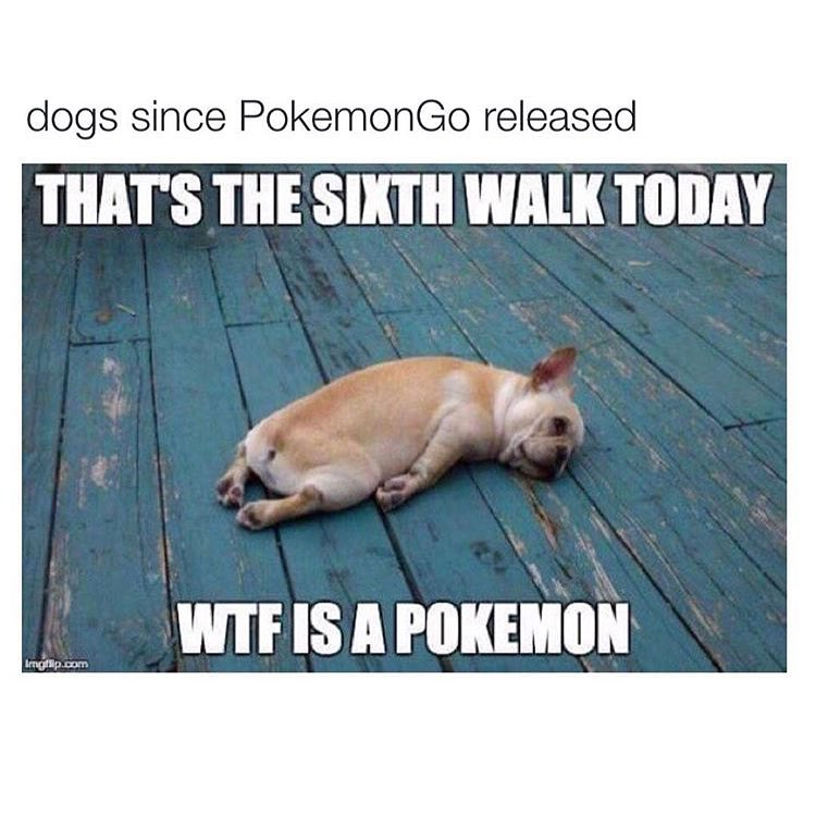 frenchie_pokemon
